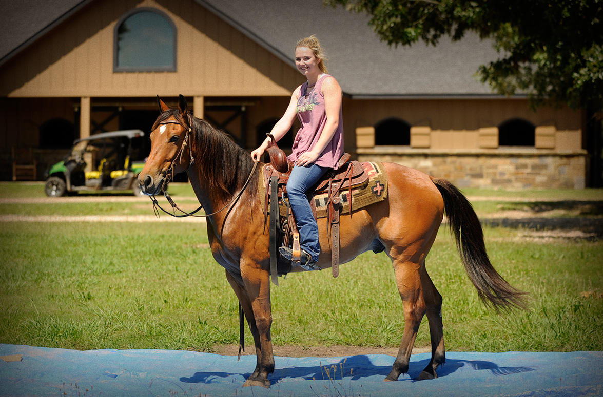 006-Dually2-Bay-AQHA-Gelding-For-Sale