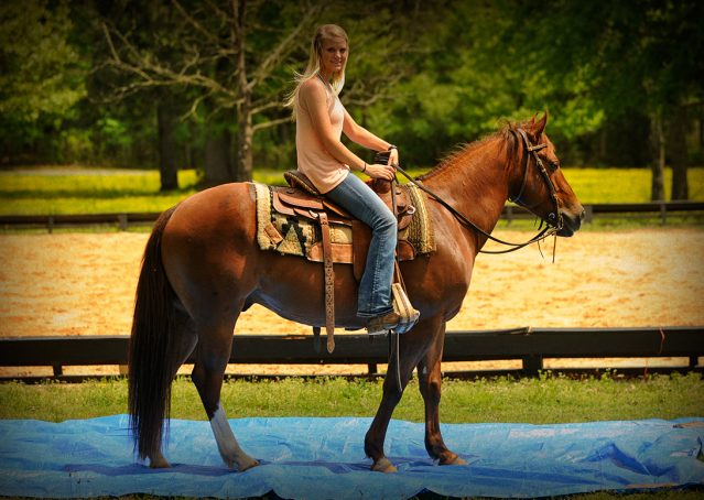 006-Jack2-Chestnut-AQHA-Gelding-For-Sale