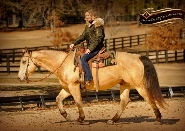 006-King-Buckskin-AQHA-Gelding-For-Sale
