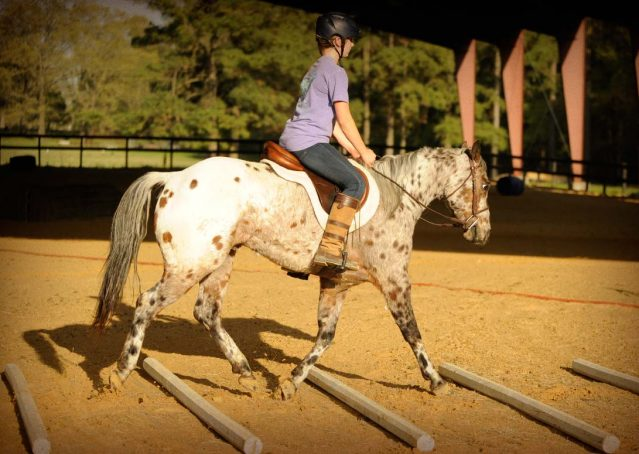 006-Shy-appaloosa-pony-for-sale