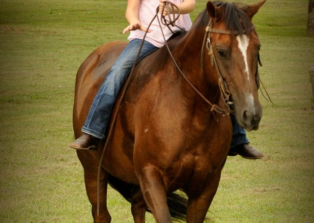 006-Stone-Bay-Quarter-Horse-Gelding-For-Sale