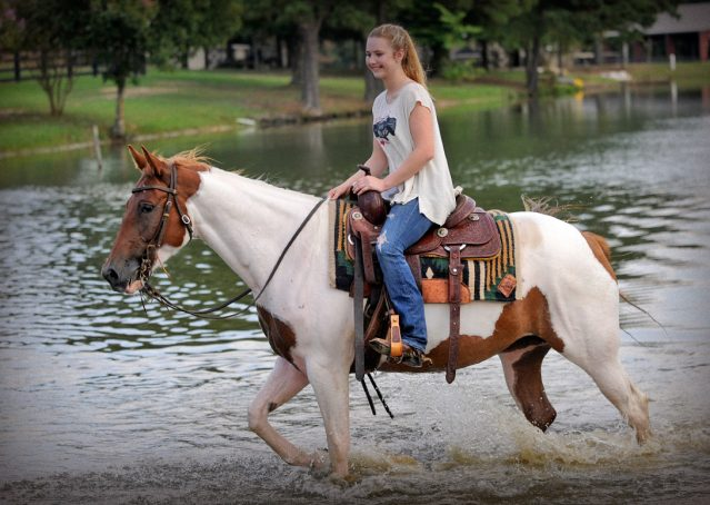 007-Amiga-APHA-Mare-For-Sale