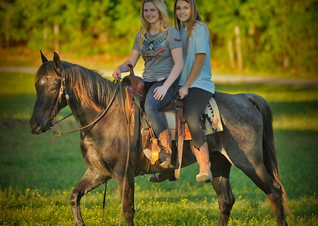 007-Blue3-AQHA-Blue-Roan-For-Sale
