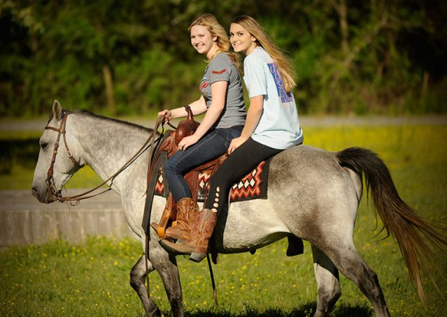 007-Casper-Grey-Quarter-Horse-Gelding-For-Sale