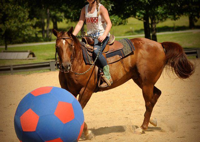 007-Clark-AQHA-horse-for-sale