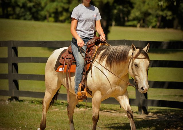 007-Dante-Buckskin-Quarter-Horse-Geldin-For-Sale