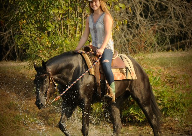007-Hollywood-AQHA-gelding-for-sale