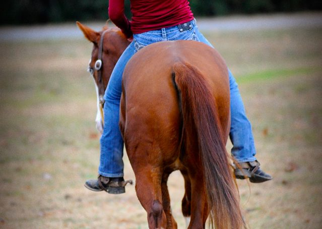 007-Indie-Sorrel-AQHA-reining-horse-for-sale