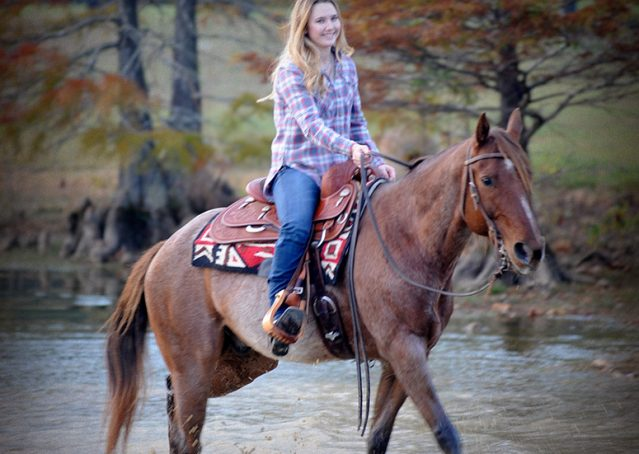 007-Jack-Frost-AQHA-Red-Roan-Gelding-For-Sale