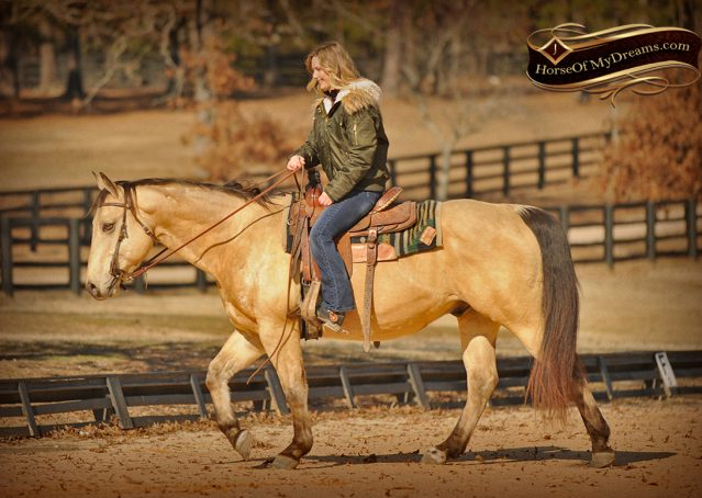 007-King-Buckskin-AQHA-Gelding-For-Sale