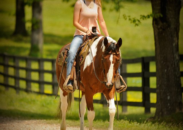 007-Rebel-APHA-Bay-Tobiano-Gelding-For-Sale