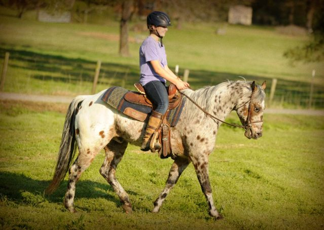 007-Shy-appaloosa-pony-for-sale