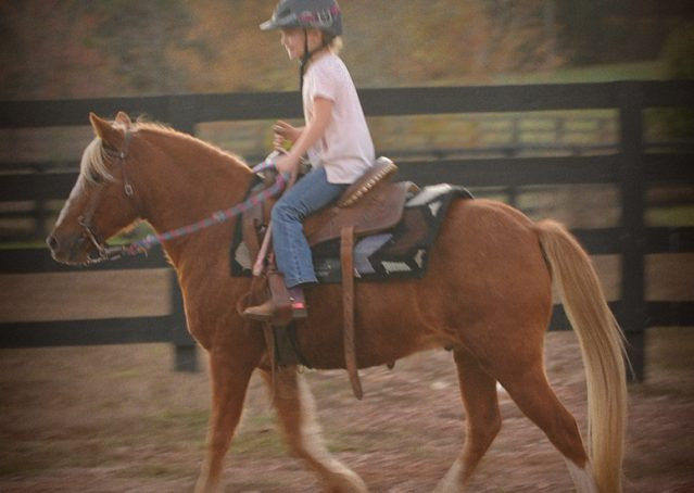 007-Sonney-Chestnut-pony-for-sale