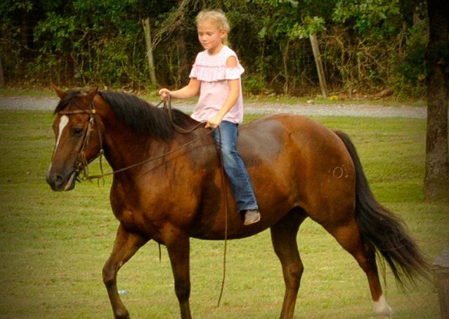007-Stone-Bay-Quarter-Horse-Gelding-For-Sale