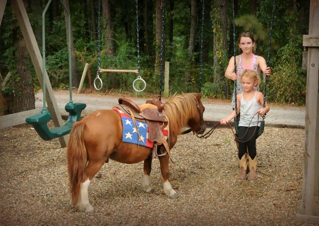 007-beginner-kids-riding-pony-for-sale-horse-of-my-dreams