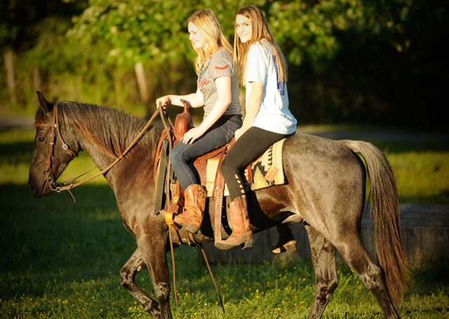 008-Blue3-AQHA-Blue-Roan-For-Sale