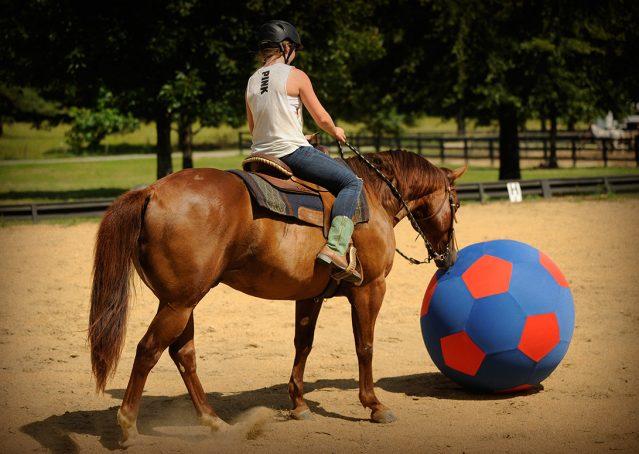 008-Clark-AQHA-horse-for-sale