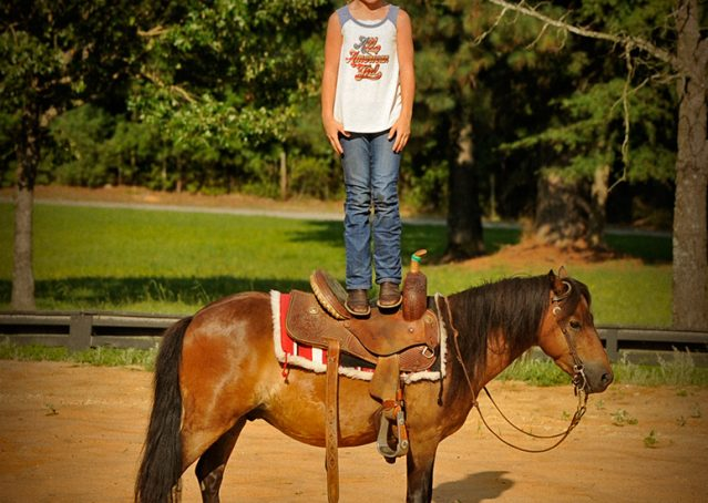 008-Harley-Bay-Pony-Gelding