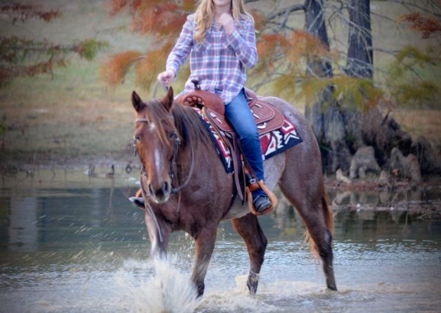 008-Jack-Frost-AQHA-Red-Roan-Gelding-For-Sale