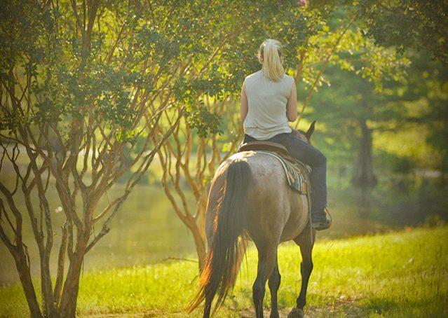 008-Jasper-Bay-Roan-Quarter-horse-gelding-for-sale