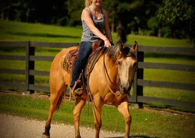 008-Jessie2-Buckskin-Gelding-For-Sale
