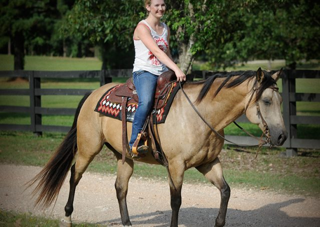 008-Leo3-Buckskin-AQHA-Gelding-For-Sale
