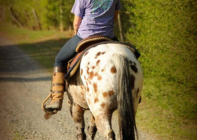 008-Shy-appaloosa-pony-for-sale