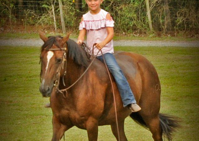 008-Stone-Bay-Quarter-Horse-Gelding-For-Sale