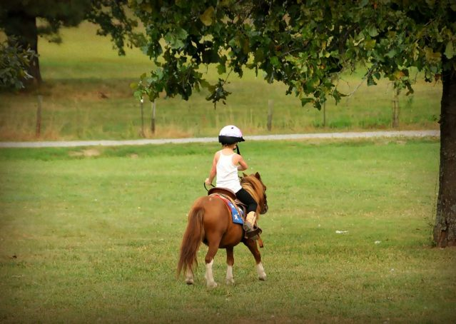 008-beginner-kids-riding-pony-for-sale-horse-of-my-dreams