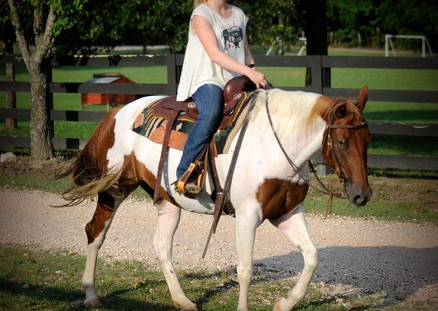 009-Amiga-APHA-Mare-For-Sale