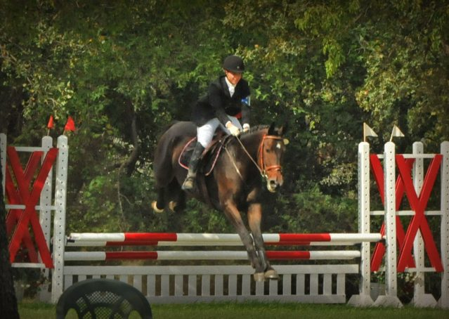 009-Beijing-dutch-warmblood-for-sale