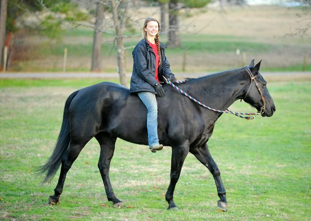009-Cajun-Black-quarter-horse-for-sale