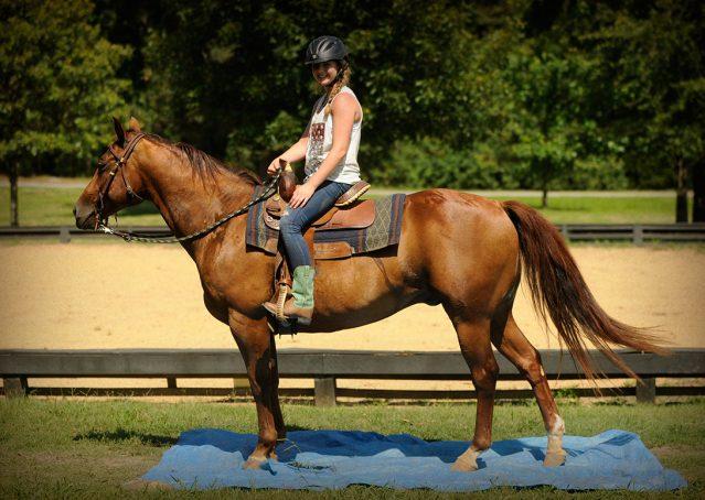 009-Clark-AQHA-horse-for-sale