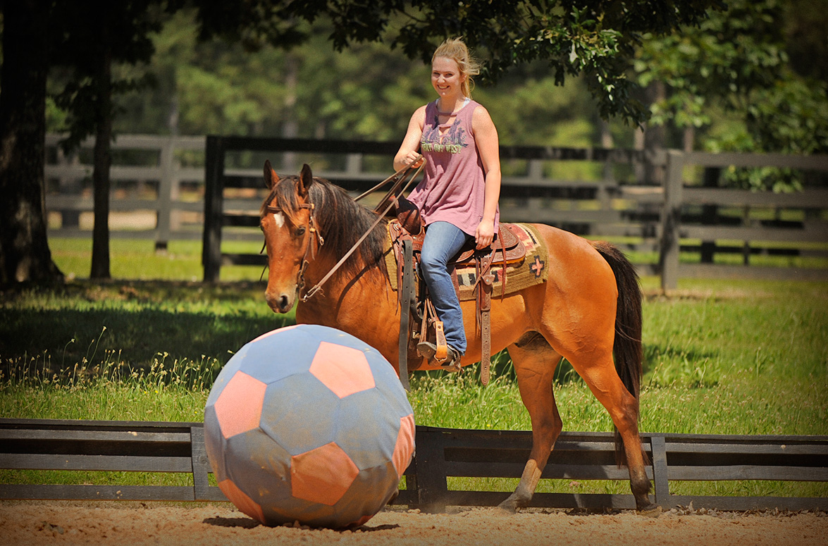 009-Dually2-Bay-AQHA-Gelding-For-Sale