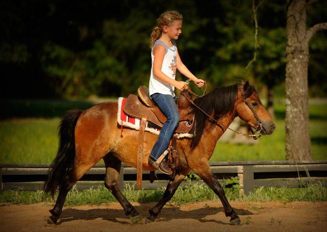 009-Harley-Bay-Pony-Gelding