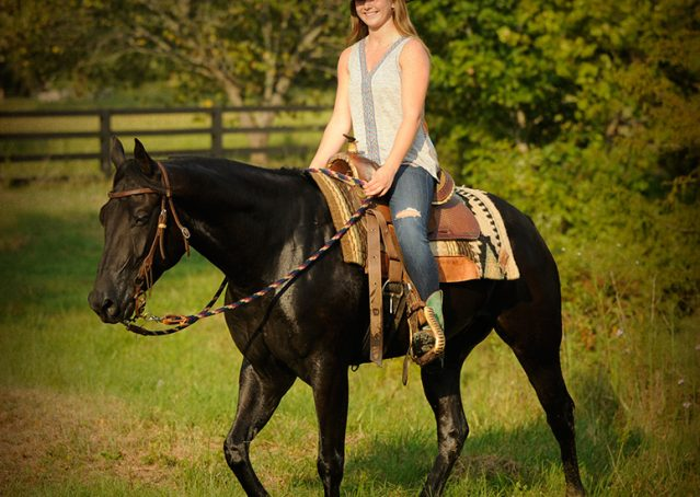 009-Hollywood-AQHA-gelding-for-sale