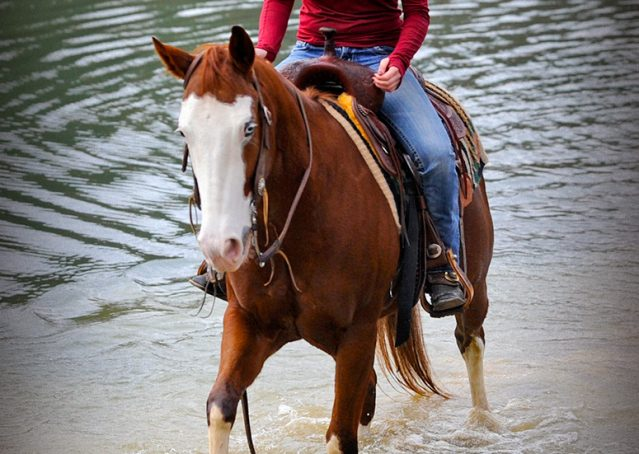 009-Indie-Sorrel-AQHA-reining-horse-for-sale