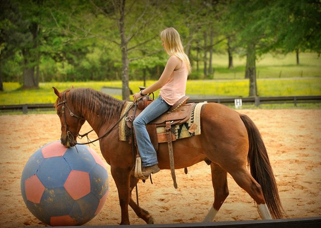 009-Jack2-Chestnut-AQHA-Gelding-For-Sale