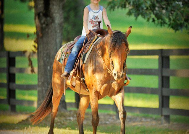 009-Jasper-Bay-Roan-Quarter-horse-gelding-for-sale