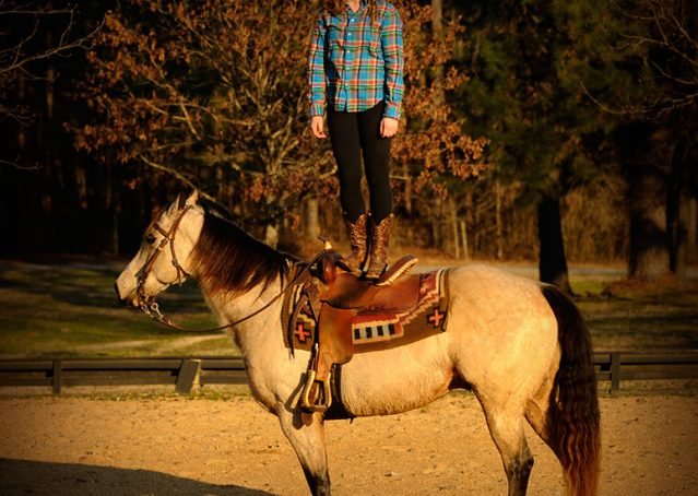 009-Kody-Buckskin-AQHA-Gelding-For-sale