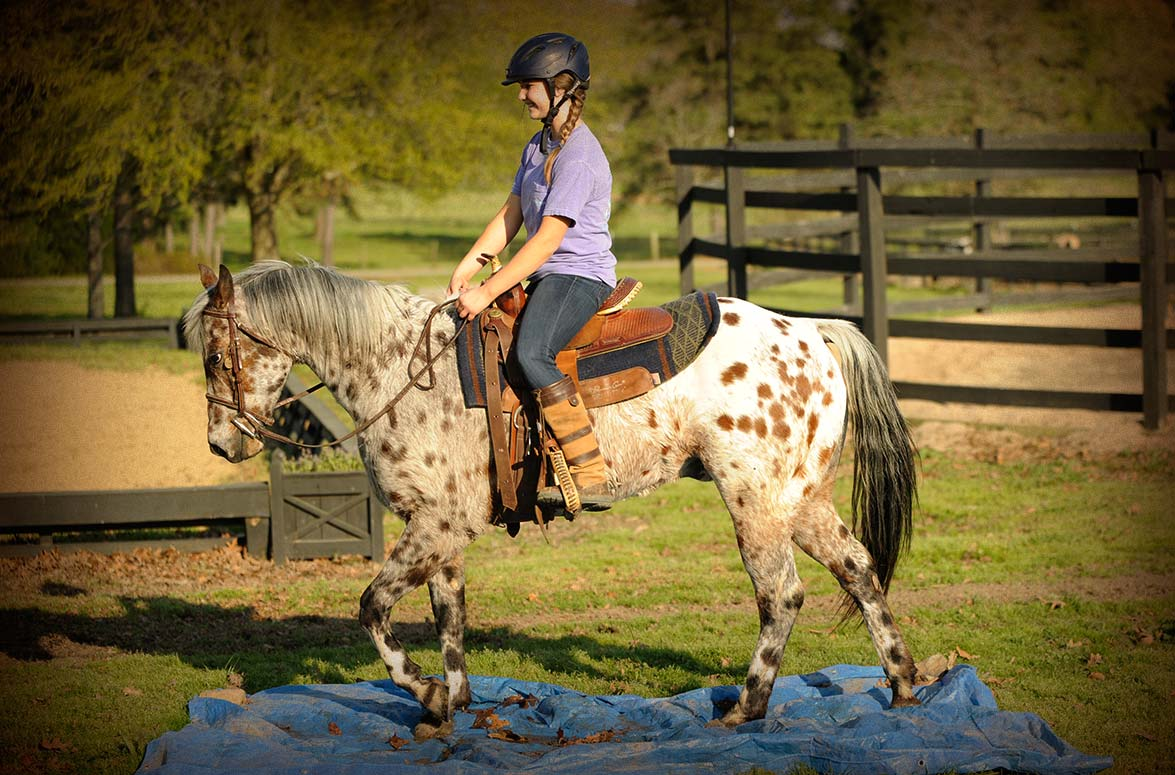 English Horses for Sale | Horse of My Dreams