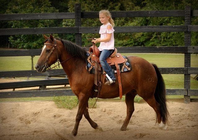 009-Stone-Bay-Quarter-Horse-Gelding-For-Sale
