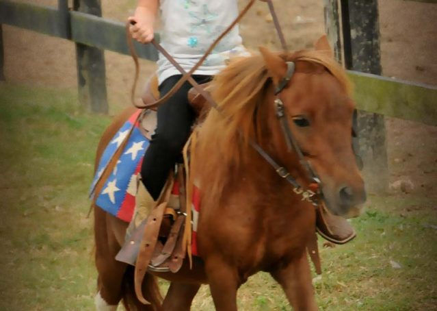 009-beginner-kids-riding-pony-for-sale-horse-of-my-dreams