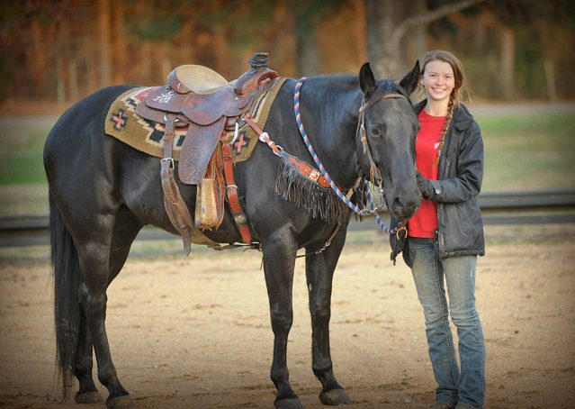 010-Cajun-Black-quarter-horse-for-sale