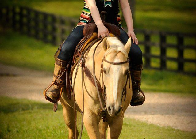 010-Cisco-Palomino-Quarter-Horse-Gelding