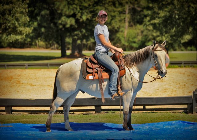 010-Dante-Buckskin-Quarter-Horse-Geldin-For-Sale
