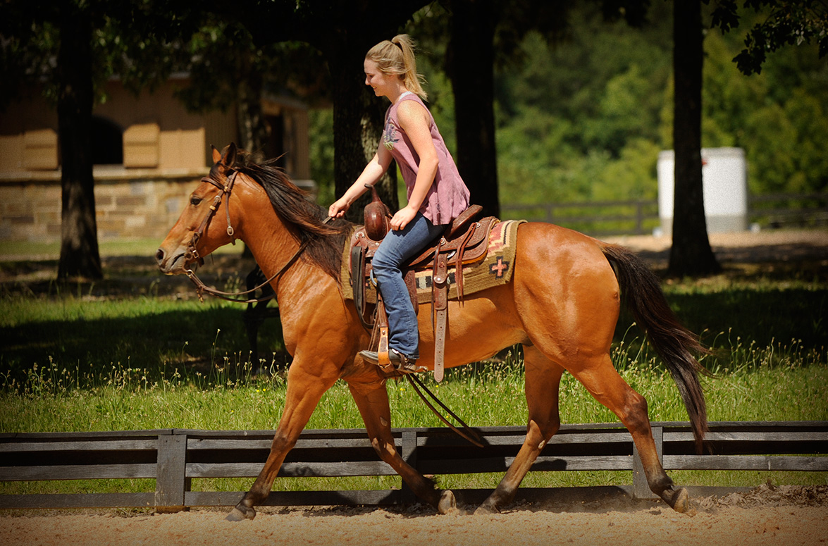 010-Dually2-Bay-AQHA-Gelding-For-Sale