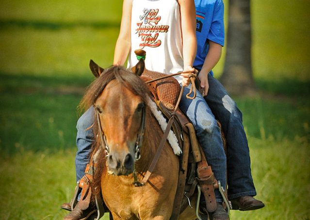 010-Harley-Bay-Pony-Gelding