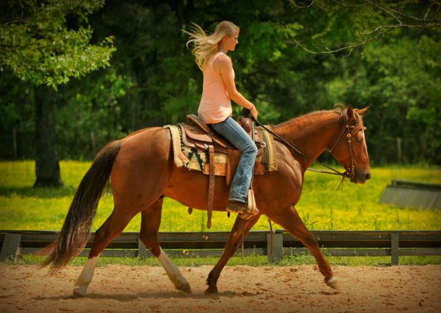 010-Jack2-Chestnut-AQHA-Gelding-For-Sale