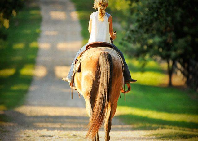 010-Jasper-Bay-Roan-Quarter-horse-gelding-for-sale